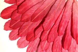 2019-Red Feather