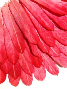 2019-Red Feather2