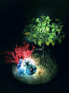マングローブと珊瑚礁 2018