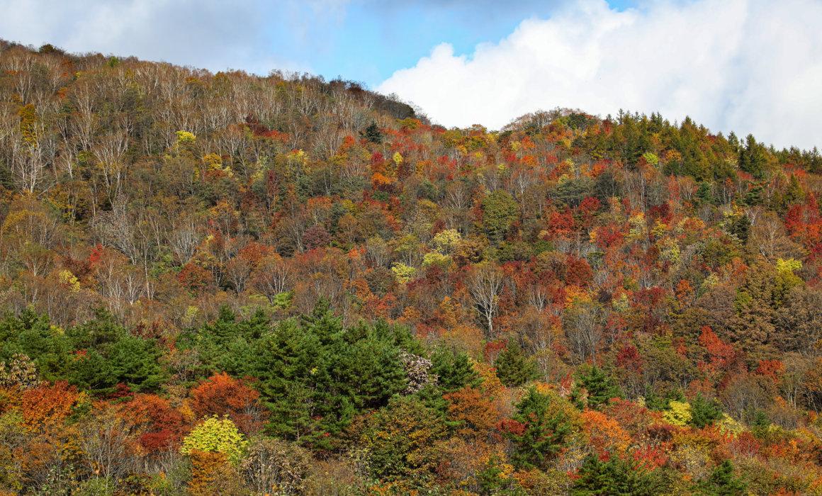 秋の色を楽しむ