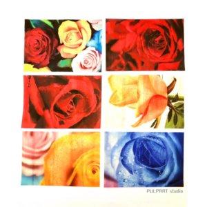 Rose Photograhy