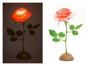 Salmonpink Rose1